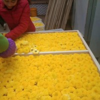 菊花烘干机  农副产品烘干设备 中草药烘干机厂家
