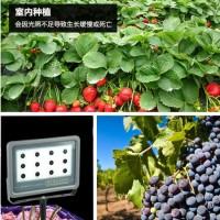 草莓大棚专用补光灯多少钱/草莓大棚专用补光灯原理