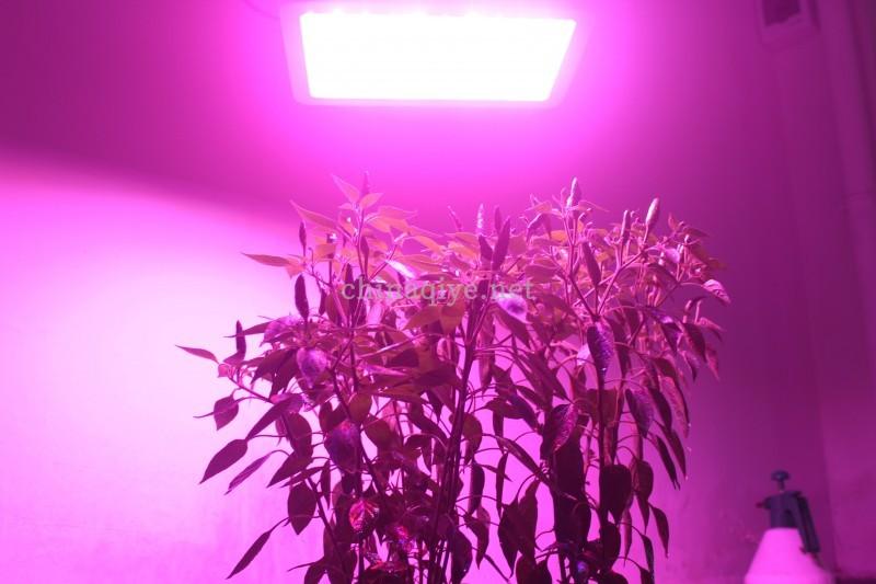 厂家批发激光植物生长