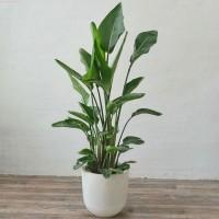 大型绿植 无锡绿化租摆,植物租赁公司,办公室植物租摆盆栽出租