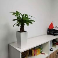 专业小型绿植租赁养护