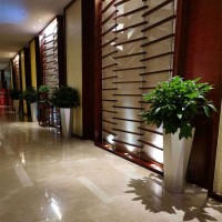 大型植物租赁 植物租赁 绿植租摆  绿化养护公司
