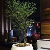 无锡绿化租摆,报价植物租赁公司,无锡办公室植物租摆盆栽出租