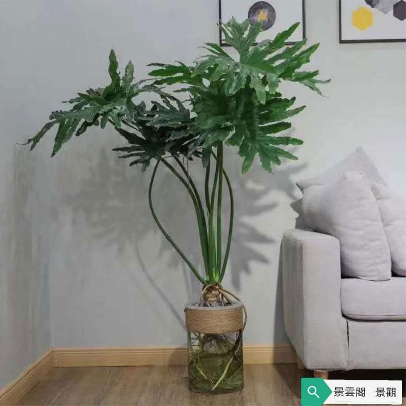 精品大型绿植 无锡花卉租摆丨植物租赁丨无锡花卉销售丨绿植租摆