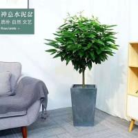 花卉租赁 绿植租摆