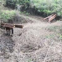 木材骡马山路运输