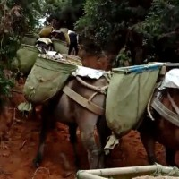 沙子石子骡马运输