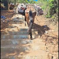 建设材料骡马运输